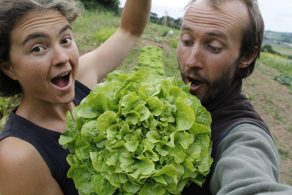 Salade à Plein le Boutoc