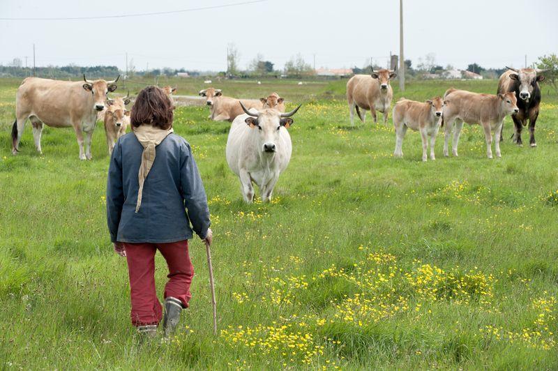 Femme et vaches